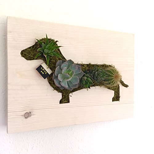 CUSTOM COLOR: Doxie Dachshund Succulent + Cacti Vertical for sale  Delivered anywhere in USA