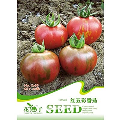 Lycopersicon Esculentum Mill Seeds Tomato Vegetable 20pcs