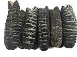 China Good Food Dried Seafood Dried Australia Sea Cucumber 澳洲禿參 Free Worldwide AIRMAIL