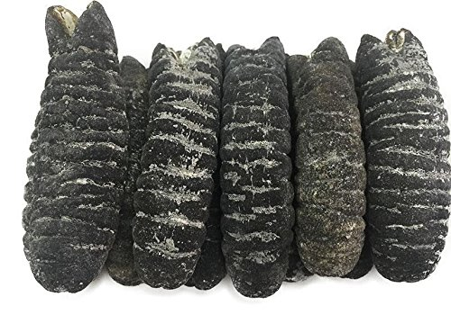 China Good Food Dried Seafood Dried Australia Sea Cucumber 澳洲禿參 Free Worldwide AIRMAIL by China Good Food