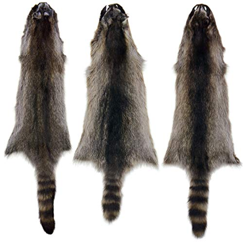 Used, 3 Pack AuSable Fur Tanned Silver Satin Raccoon Fur for sale  Delivered anywhere in USA