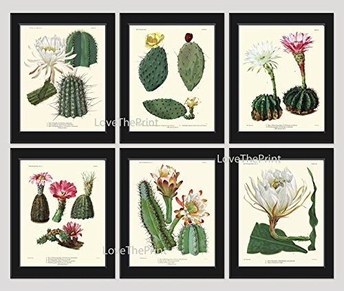 Botanical Print Set of 6 Antique Beautiful Cactus Plant Blooming White Pink Yellow Flowers Tropical Desert Garden Nature Home Room Decor Wall Art Unframed