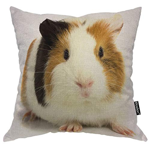 Moslion Throw Pillow Cover Guinea Pig 18x18 Inch Three Color Staring White Background Animal Cute Lovely Adorable Square Pillow Case Cushion Cover for Home Car Decorative Cotton - Pillow Case Adorable