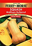 Ferry-Morse 1384 Squash Seeds, Butternut (3.7 Gram Packet)