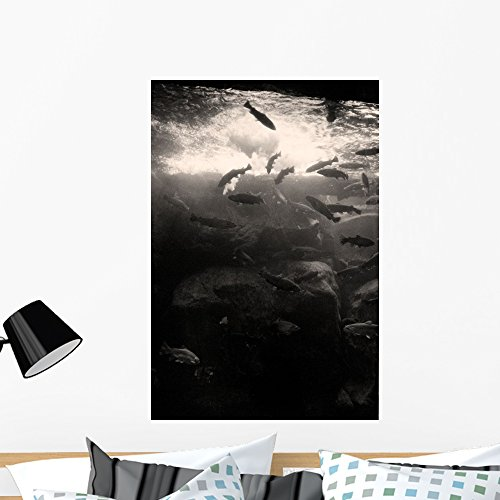 Trout Wall Mural by Wallmonkeys Peel and Stick Graphic  WM13
