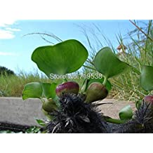 water hyacinth seeds , and pot seeds, flower seeds ( mixed colors ) 50 seeds/pack