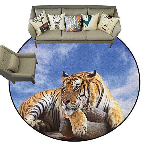 (Safari,Outdoor Carpet Tiger Sitting on Wood Clear Blue Sky Wildlife Morning Stripes Predator Print D40 Bedroom Living Room Area Rug)