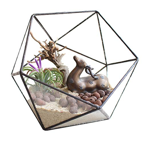 Iusun Geometric Fleshy Glass Flower House Crafts Greenhouse Flower Pot for Cacti Plants Patio Home Office Garden Indoor/Outdoor Decor 6.69x6.69x6.3'' - Ship from USA (Black) (Goods Sets Patio Home)