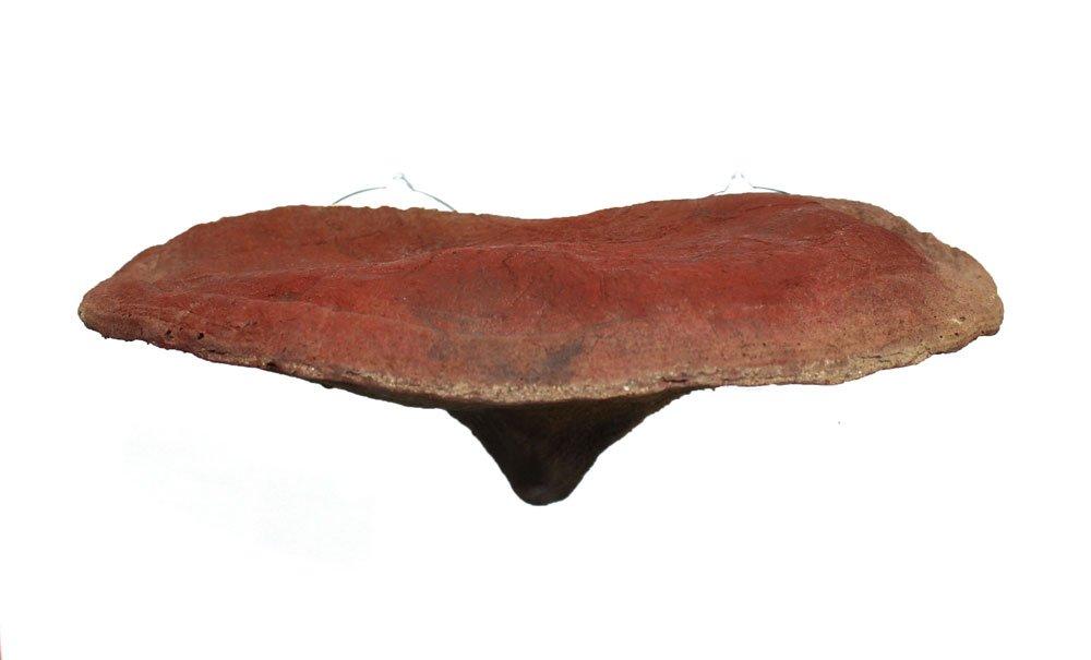 Pangea Suction Cup Mushroom Ledge