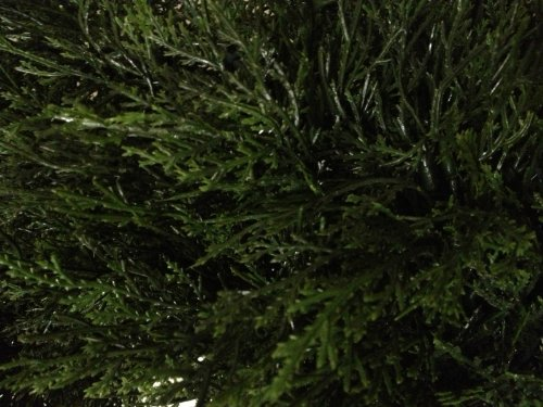 Silk Tree Warehouse Two 4 Foot 3 Inch Artificial Cypress Spiral Topiary Trees Potted Indoor or Outdoor by Silk Tree Warehouse (Image #1)