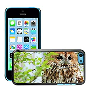 Super Stella Slim PC Hard Case Cover Skin Armor Shell Protection // M00145794 Owl Nature Fluffy Animal Photos // Apple iPhone 5C