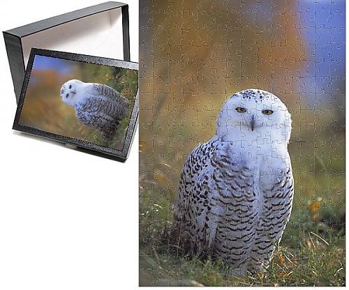 Photo Jigsaw Puzzle of Snowy owl, (Snowy Owl Photo)