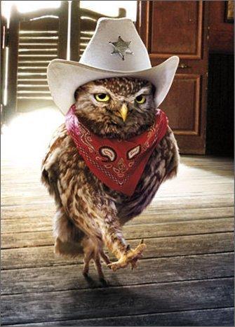 Amazon Cowboy Owl Avanti Funny Birthday Card Office Products