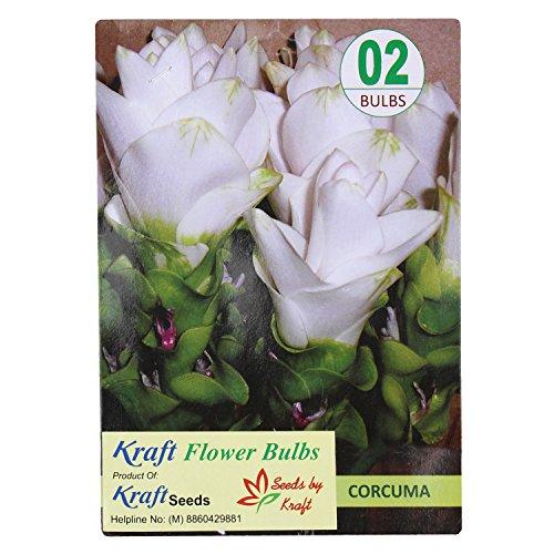 Carcuma White (2 Bulbs) Flower Bulbs by Kraft Seeds