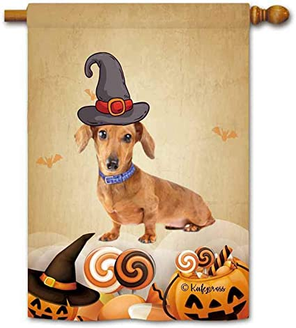 Dachshund Halloween Decorations.Amazon Com Kafepross Cute Dachshund Dog In Witch Hat House Flag Happy Halloween Pumpkin Candy Fall Decor Banner For Outdoor 28 X40 Print Both Sides Garden Outdoor