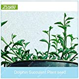 AGROBITS ZLKING 100 Pcs Rare Dolphin Succulent Bonsai Cute Little Dolphins Indoor Flowering Plants