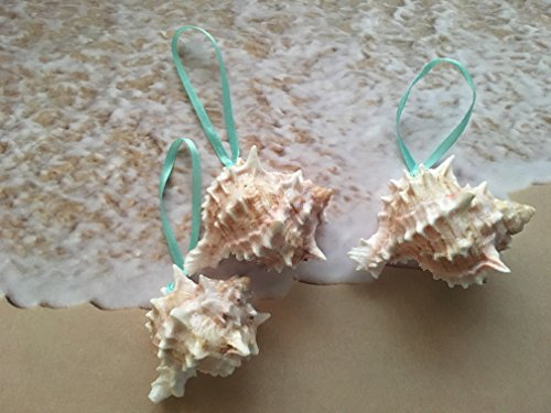 Glittered Pink Murex Seashell Ornaments with Turquoise Ribbon, 3