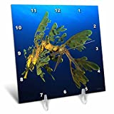 Cheap 3dRose dc_46260_1 Leafy Sea Dragon-Phycodurus Eques-In Esperance, Western Australia-Desk Clock, 6 by 6-Inch
