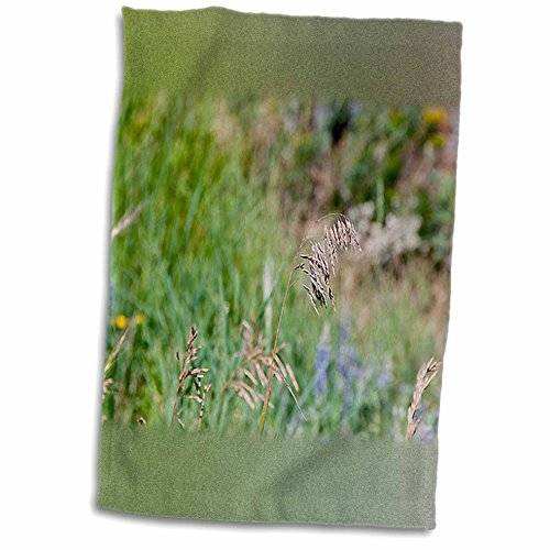 3dRose Jos Fauxtographee Realistic - A Weed Floating in the Wind on a Grassy Weed Backdrop with Spots of Blue and Yellow - 12x18 Towel (twl_47445_1)
