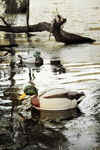 MOJO Outdoors Swimmer Mallard Duck Decoy by MOJO Outdoors (Image #2)