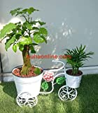 Nuha Double Pot Cycle Style Stand (White) Tricycle Plant Stand - Flower Pot Cart Holder - Ideal for Home, Fruits and Flowers, Garden, Patio.