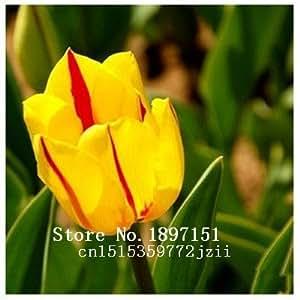 Big sale Bonsai tulip seeds, white, blue, purple flower seeds, 200 varieties a large bag 200PC seeds, flower plants