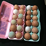 12 + Fertile Hatching Chicken Eggs Barnyard Mix- White Leghorns, Lavender Orpingtons, Red Comets, Black Australorp, Easter Egger, Cream Legbar, Polish, Blue and Black Copper Marans