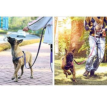 VVAP Correa de Nylon Resistente para Mascotas con un cómodo asa ...