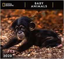 National Geographic Baby Animals 2020 Wall Calendar Zebra Publishing 9781772183863 Amazon Com Books