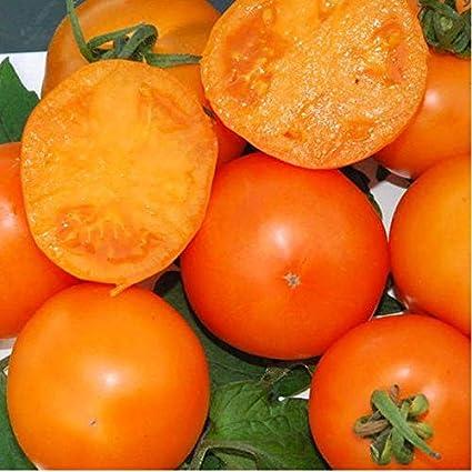 Amazon Com Mandarin Tomato Seeds Deep Orange Persimmon Colored Fruit Excellent Slicer 10 Seeds Garden Outdoor