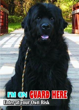 Amazon.com: Atención – cuidado perro de agua/Fun Sign Moscú ...