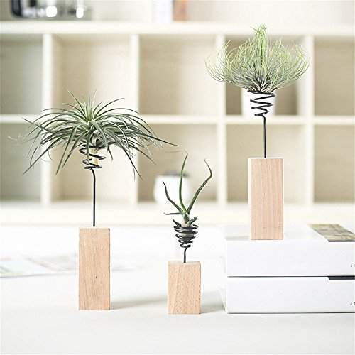 Danmu 3pcs (3 Sizes) Wood Stand Air Plant Holder Airplant Container Tabletop Planter Tillandsia Planter