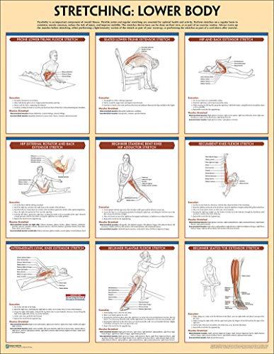 Stretching Poster: Lower Body (Anatomy) - Training Strength Poster Anatomy