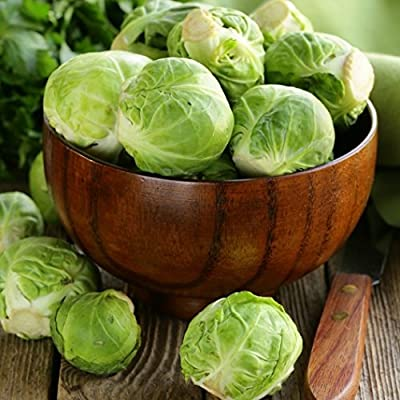 David's Garden Seeds Brussels Sprouts Long Island Improved PBR14D (Green) 100 Organic Hybrid Seeds
