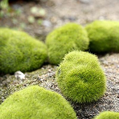 PETSOLA 6pcs Musgo Adornos De Césped De Hierba Artificial - Piedras - Decoración De Jardín En Casa 8 Cm: Amazon.es: Hogar