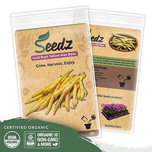 Organic Bean Seeds (APPR. 125) Gold Rush Yellow Wax Bean - Heirloom Vegetable Seeds - Certified Organic, Non-GMO, Non Hybrid - USA