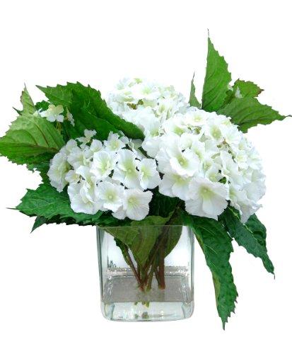 Silky Dreams Hydrangea in Square Glass H2O Vase