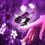 Butterfly Kisses Fragrance Oil - 2 LB - for Candle & SOAP Making by VIRGINIA CANDLE SUPPLY - Free S&H in USA
