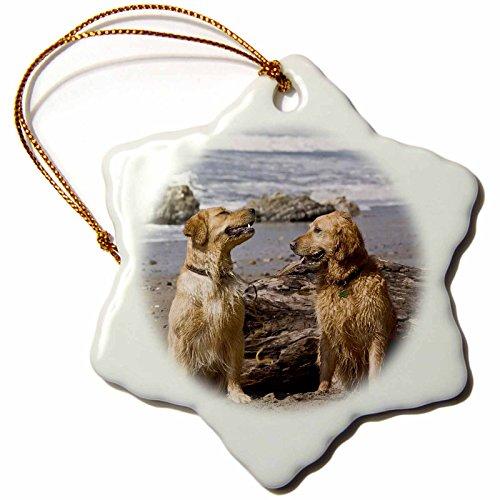 3drose-danita-delimont-dogs-two-golden-retriever-dogs-in-california-us05-zmu0306-zandria-muench-bera