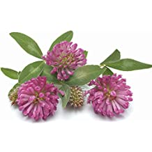 10000 Red Clover Seeds