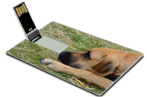 Luxlady 32GB USB Flash Drive 2.0 Memory Stick Credit Card Size Head of great dane lying IMAGE 20660119 ()