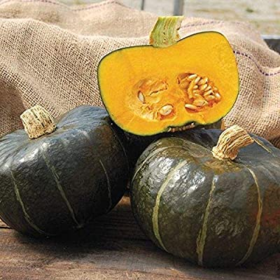 Burgess Buttercup Winter Squash Seeds (40 Seed Pack) : Garden & Outdoor