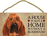 A house is not a home without Bloodhound Dog - 5