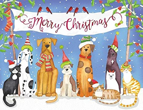 Merry Christmas Puppies.Caspari Merry Christmas Pets Christmas Cards Box Of 16 Cards And Envelopes