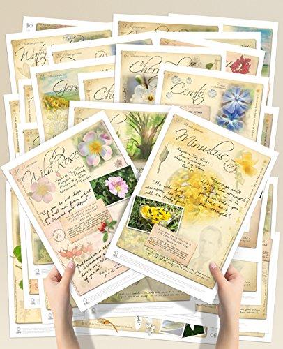 flower poster set