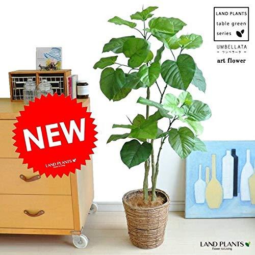 LAND PLANTS 【造花】 ウンベラータ × ブラウンバスケット B07KRT7G15