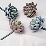 """Ialwiyo Assorted Realistic Cute Green Home Garden Faux Artificial Echeveria Succulent Cactus Plants Unpotted 3.33""""Wide x 5""""Tall (4pcs with 2 Different Colors)"""