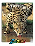 Cheetahs, Wildlife Education, Ltd. Staff, 0937934771
