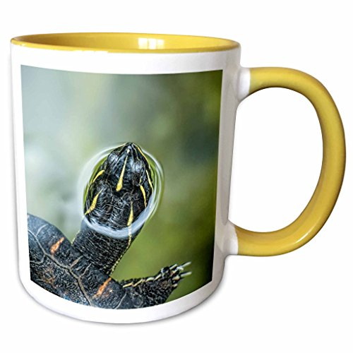3dRose Danita Delimont - Reptile - Turtle swimming, peeping out of the water in St. Augustine, Florida - 11oz Two-Tone Yellow Mug - Outlets St Florida Augustine