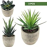 Supla 3 Pcs Assorted Decorative Boxwood Topiaries Artificial - Best Reviews Guide